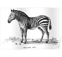 Zebra - Super Retro Poster