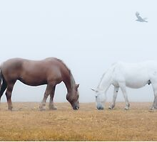 Grazing in the Fog by Colleen Farrell