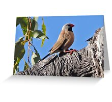 Long-tailed Finch  (red bill) Greeting Card