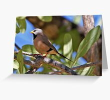Long-tailed Finch  (yellow bill) Greeting Card