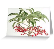 Spice Berry Coral Ardisia Evergreen Shrub Greeting Card
