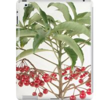 Spice Berry Coral Ardisia Evergreen Shrub iPad Case/Skin
