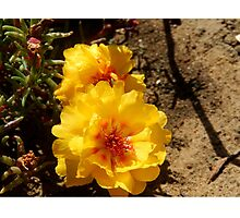 MOSS ROSE (I) Photographic Print