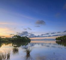 Our Wetlands - Wellington Point Qld Australia by Beth  Wode
