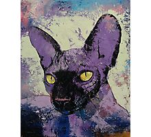 Sphynx Painting Photographic Print