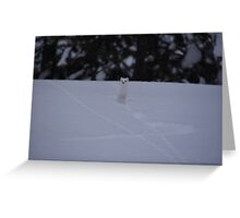 Ermine - 1 Greeting Card