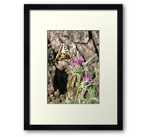 Scarce Swallowtail Butterfly and Thistle Framed Print