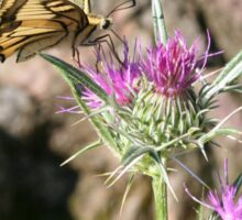 Scarce Swallowtail Butterfly and Thistle Sticker