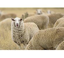 Smiling at ewe! Photographic Print