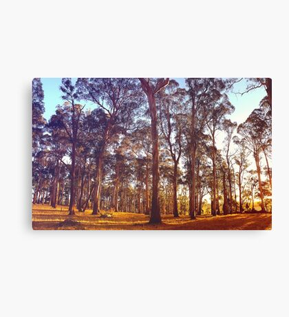 Aussie Summer evenings at Lardner Park, Victoria. Canvas Print