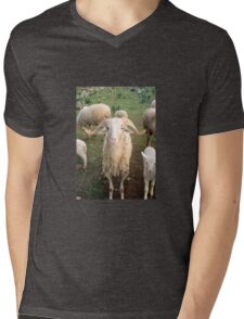 A Flock Of Sheep In A Rural Setting T-Shirt