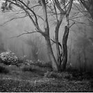 Mt Donna Buang  2 by Christine Wilson