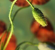 Red Poppies Impression Sticker
