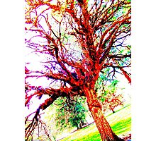 Colourful tree Photographic Print