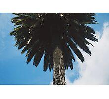 palm tree Photographic Print