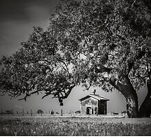 Tree House  by Christine  Wilson Photography