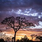 Sunset Tree by bababen
