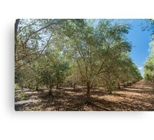 Summer in the Olives Canvas Print