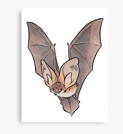 Grey long-eared bat Canvas Print