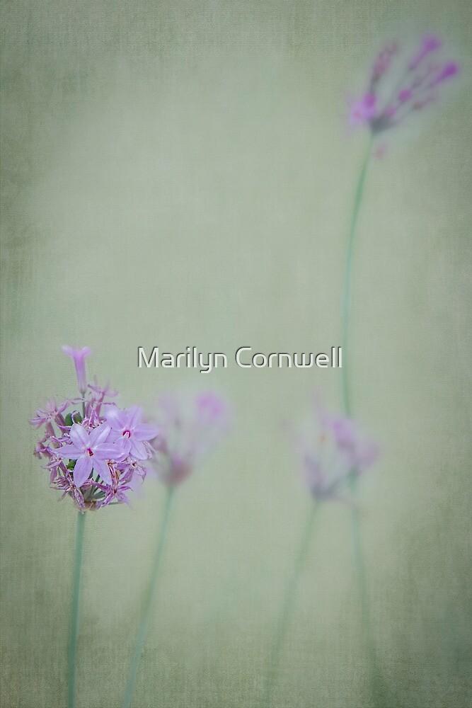 Society Garlic by Marilyn Cornwell