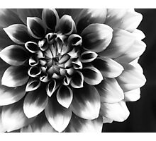 Mad About You Photographic Print