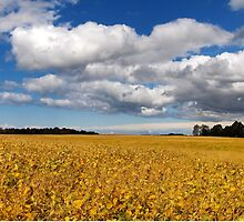 Where Earth Meets Sky by Kathilee