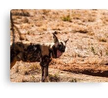 Wild dog Canvas Print