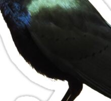 shiny bird sticker Sticker