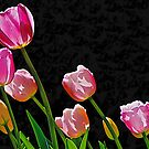 Just Tulips by John Butler