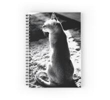 black&white singapura cat 1 Spiral Notebook