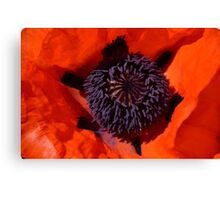 Close up of red poppy Canvas Print