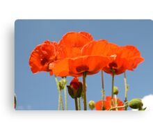 Red poppies against a blue sky Canvas Print
