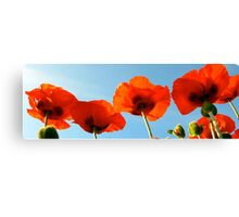 Red poppy panorama Canvas Print