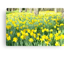 Daffodil wood Canvas Print