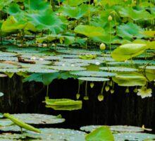 Pond. Sticker