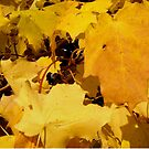 Yellow Maple Leaves by Shulie1