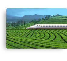 Shinkansen line in Green Tea Meadows, near Kyoto, Japan Canvas Print