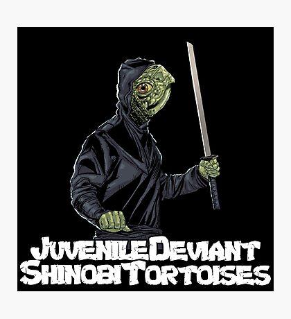 Juvenile Deviant Shinobi Tortoises Photographic Print