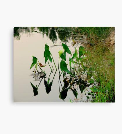 Irrigation Reflections Canvas Print