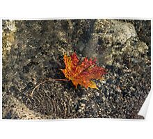 Submerged Beauty - Sunny Ripples on a Maple Leaf Poster