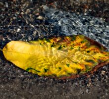 Submerged Beauty - Sunny Ripples on a Multicolored Cherry Leaf Sticker