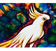 Cocky cocky Photographic Print