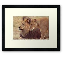 African Male Lion with Lioness Framed Print
