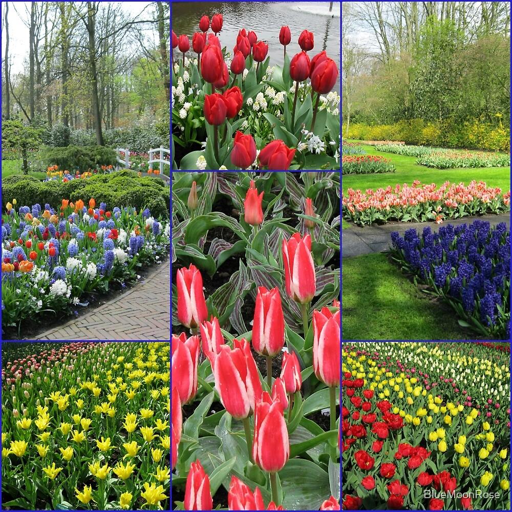 Keukenhof Collage featuring Pinocchio Tulips by BlueMoonRose