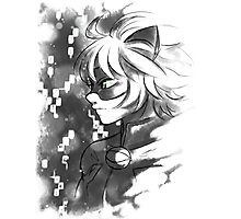 ML- Chat Noir  Photographic Print