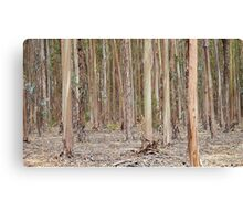 """Into The Woods"", Margaret River, Western Australia Canvas Print"