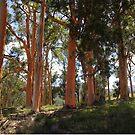 Treescape by Liz Worth
