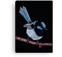 Superb Fairy Wren in Coloured Pencil Canvas Print