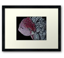 Australian Galah in Coloured Pencil Framed Print