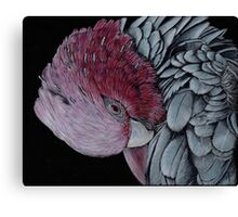 Australian Galah in Coloured Pencil Canvas Print